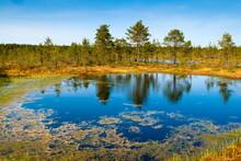 Viru Bog (Viru Raba) Peat Swamp, Lahemaa National Park, Harjumaa, Laane-Virumaa, Estonia