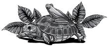 Monochromatic Frog And Turtle Vector Illustration Graphics Art