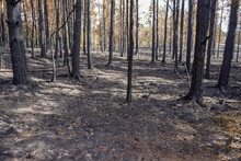 Aftermath Of A Fire In Woodland