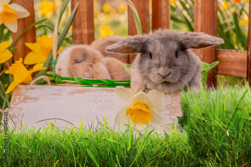 Fototapeta Rabbits, beauty art design of cute little easter bunny in the meadow.Spring flowers and green Grass. Sunbeams. obraz