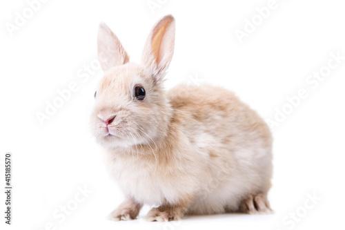 Fototapeta Little bunny in front of white background.