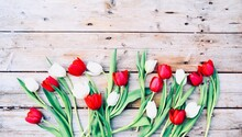 Red Tulips On Wooden Background