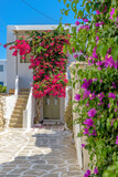 Fototapeta Kwiaty - Traditional Cycladitic alley with a narrow street, whitewashed houses and a blooming bougainvillea in Parikia, Paros island, Greece.