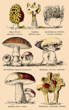 Various Edible And Conditionally Edible Mushrooms. Illustration Of The 19th Century. Germany.