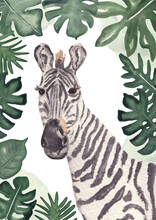 Zebra Baby Illustration With Leaves. A2 Poster Wild Horse. Watercolor Safari Animal Poster. Hand Painted Wild Animal: Animal Kids Illustration Realism Semirealism Greeting Card Invitation Baby Shower