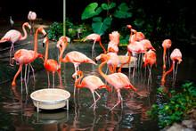 싱가포르 주롱새공원 / Singapore Jurong Bird Park