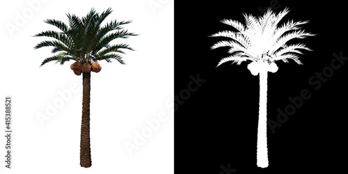 Front view of Plant (Coconut palm tree 1) Tree png with alpha channel to cutout Poster Mural XXL