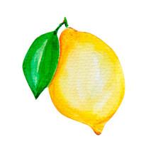 Watercolor Painting Of Lemon Art Illustration
