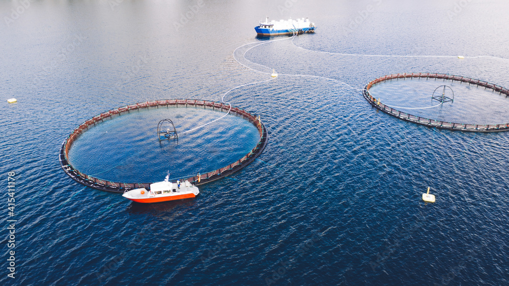 Fototapeta Salmon fish farming in Norway sea. Food industry, traditional craft production, environmental conservation. Aerial view of round mesh for growing and catching fish in arctic water surrounded by fjords