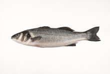 Sea Bass Fish On A White Background