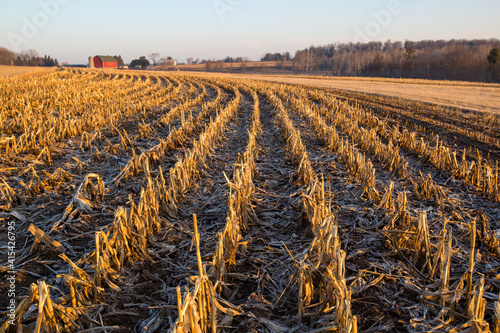 Canvastavla Red barn with a harvested cornfield in central Wisconsin