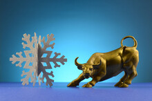 Winter Bull Market
