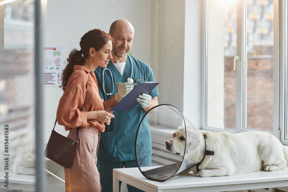 Fototapeta Portrait of young woman talking to veterinarian at vet clinic with pet dog wearing protective collar at examination table, copy space