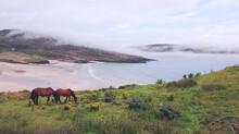 Horses At Barley Cove Beach, West Cork, Ireland