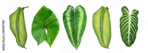 Photographie More beautiful exotic tropical leaves, isolated leaf background,clipping path in