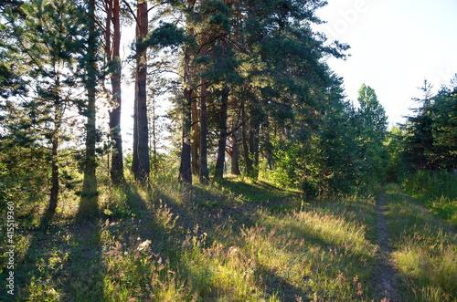 The nature of Seliger. Evening landscape with trees © koromelena