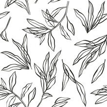 Vector Vintage Botanical Seamless Pattern With Eucalyptus, Laurel. Hand Drawn Ink Silhouette With Plant, Branches, Leaves Isolated On White. Floral Background. Sketch Of Natural Element