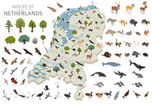 Isomatric 3d Design Of Netherlands Wildlife. Animals, Birds And Plants Constructor Elements Isolated On White Set. Build Your Own Geography Infographics Collection.