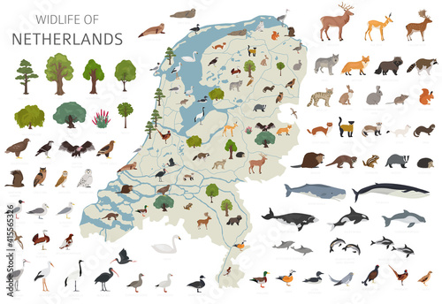 Fototapeta premium Flat design of Netherlands wildlife. Animals, birds and plants constructor elements isolated on white set. Build your own geography infographics collection