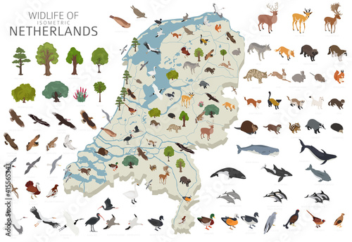 Fototapeta premium Isomatric 3d design of Netherlands wildlife. Animals, birds and plants constructor elements isolated on white set. Build your own geography infographics collection.