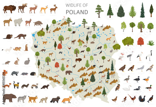 Fototapeta premium Flat design of Poland wildlife. Animals, birds and plants constructor elements isolated on white set. Build your own geography infographics collection.