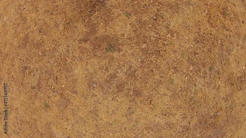 Obraz na plátne Brown dry grass texture background