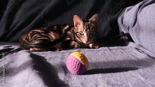 Fototapeta Gato jugando con pelota en el sofá