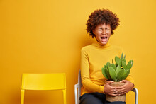 Displeased Young Afro American Woman Feels Desperate Holds Pot Of Cactus Poses On Chair Against Yellow Background Expresses Negative Emotions Isolated Over Yellow Background. Loneliness Concept