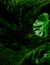 Different Palm Leaves On Foreground And Dark Background