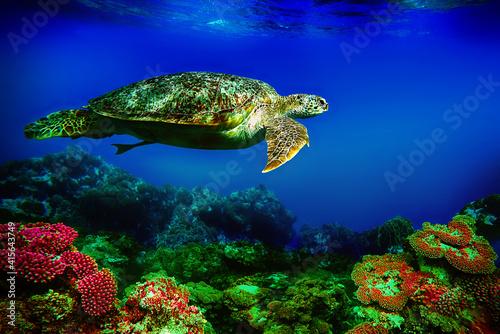 sea turtle swims underwater © Happy monkey