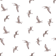 Seamless Pattern With Young Herring Seagull In Flight. Young Polar Seagull As Pattrern Isolated On White