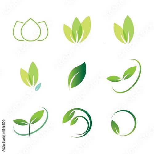 Fototapety, obrazy: leaf