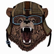 Bear Wild Animal Face. Grizzly Cute Brown Bear Head Portrait.