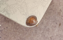 Lone Clam On Edge Of Table