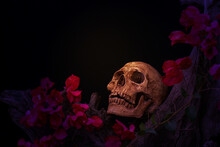 Still Life Of  Skulls On Dry Wood With Red Flowers On Black Background