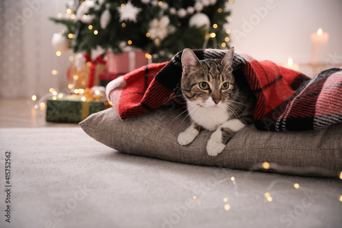 Tela Cute cat covered with plaid in room decorated for Christmas