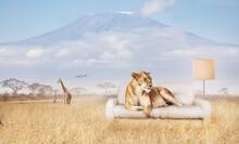 Lion Rest On Sofa In Savannah With Kilimanjaro Mountain On Background - Mixed Media