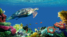 Underwater Sea Turtle Swims