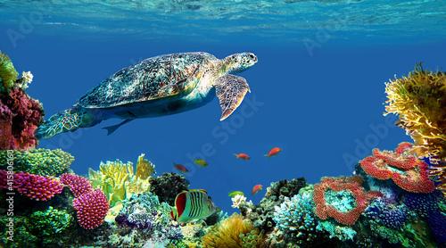 underwater sea turtle swims © Happy monkey