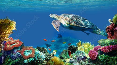 Fotografie, Obraz underwater sea turtle swims