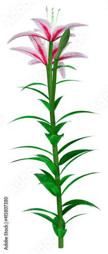 Billede på lærred 3D Rendering Stargazer Asiatic Lily on White