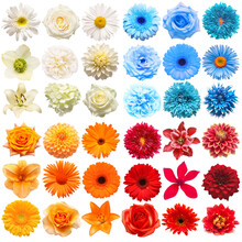 Big Collection Of Various Head Flowers Red, Blue, White And Orange Isolated On White Background. Perfectly Retouched, Full Depth Of Field On The Photo. Top View, Flat Lay