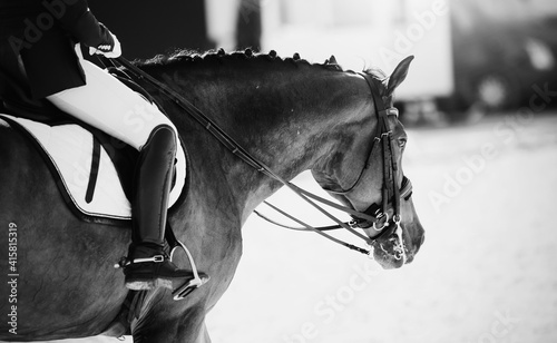 Canvas Print Equestrian sport. Dressage of horses in the arena.