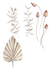 Watercolor Illustration.  Set Of Isolated On A White Background Dried Flowers, Palm Leaves, Branches, Flowers, Grass In Income Style.  Autumn Plants.  Design For Cards, Invitations, Fabrics, Clothes