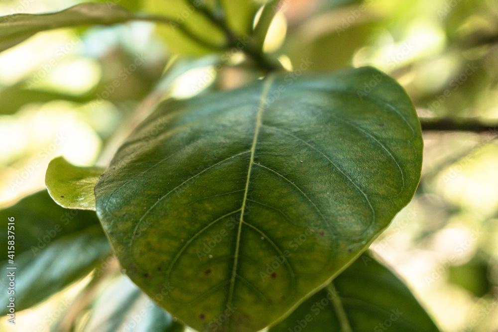 Fototapeta Zbliżenie na zielony liść rośliny, piękne naturalne tło.