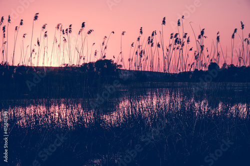 Photo Reeds in the foreground near a river in sunlight at sunset