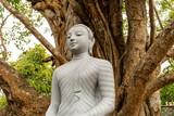 Kamienny posąg statua Buddy na tle drzewa w buddyjskiej świątyni.