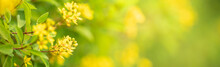Closeup Of Mini Yellow Flower On Blurred Gereen Background Under Sunlight With Copy Space Using As Background Natural Plants Landscape, Ecology Cover Page Concept.