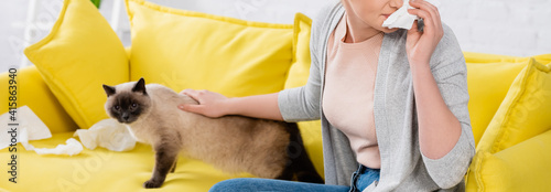Fotografie, Tablou Cropped view of woman with allergy holding napkin near cat on sofa, banner