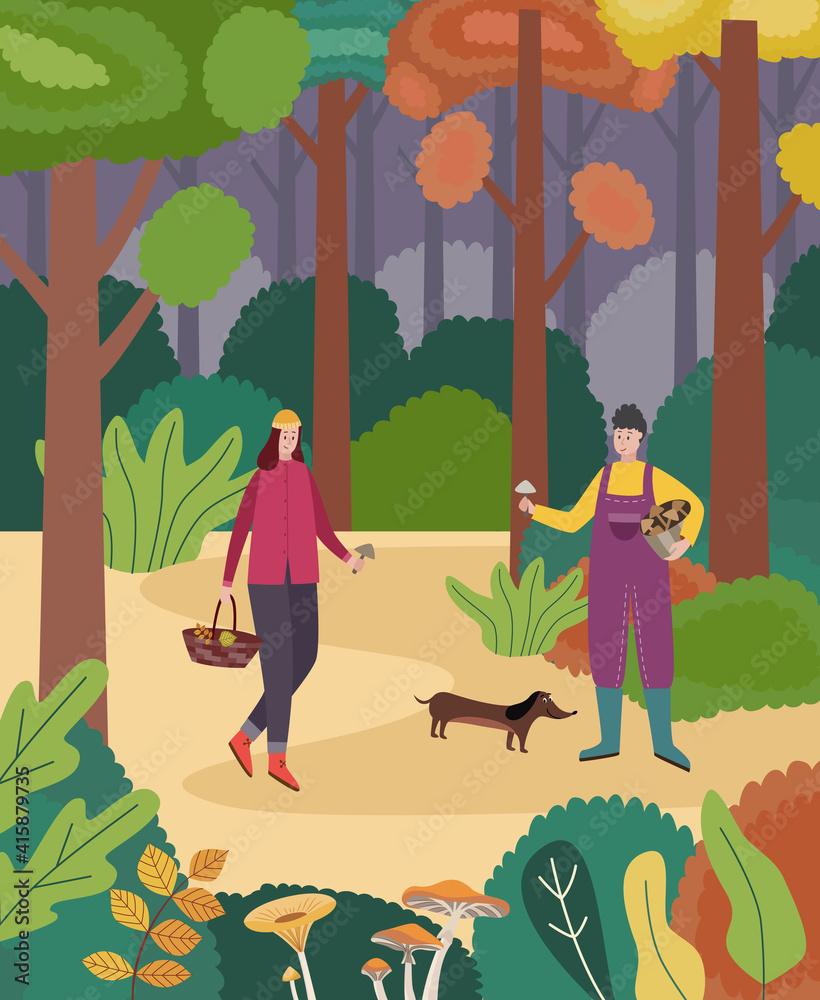 Fototapeta Picking forest edible mushrooms in autumn woodland a vector illustration.